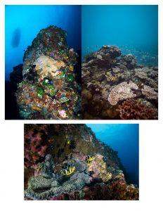 1er plongeur série